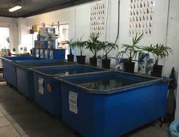 Tank nhựa hình chữ nhật nuôi dưỡng cá Koi
